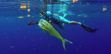 Mahi Mahi, Florida Keys, Spearfishing, Speagun, Palegic, Blue Water Spearfishing, Blue Water Guns